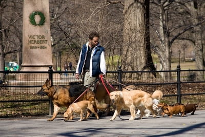 paid to walk dogs