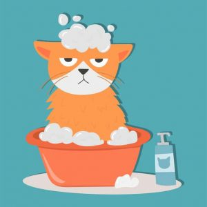 bathe cat