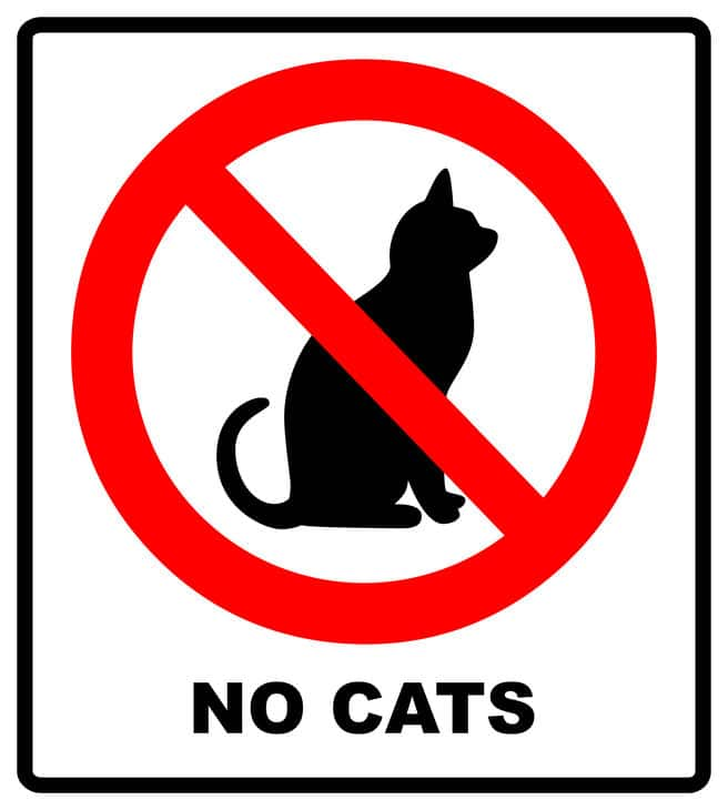 no cat area