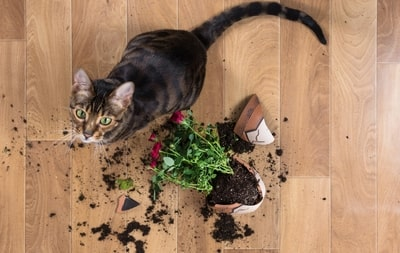 cat breaking plant pot