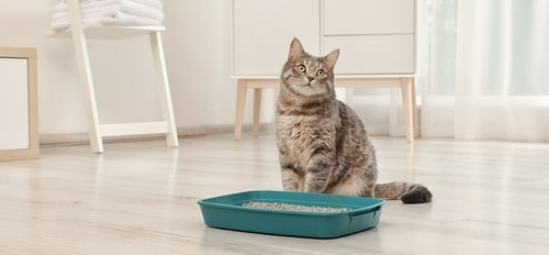 cat with litter tray