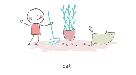 clean up after cat